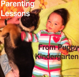 parenting lessons from puppy kindergarten